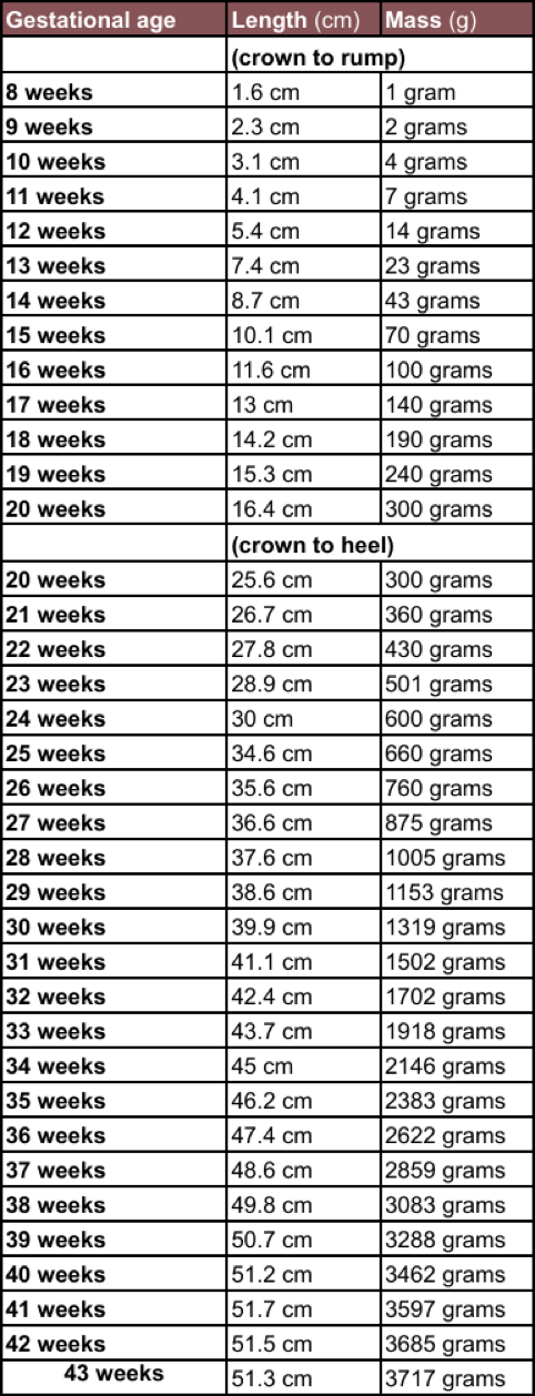 Download Unborn Baby Growth Chart Templates For Free Formtemplate